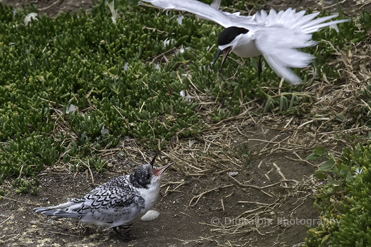 terns-blog-4