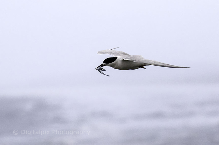 terns-blog-5