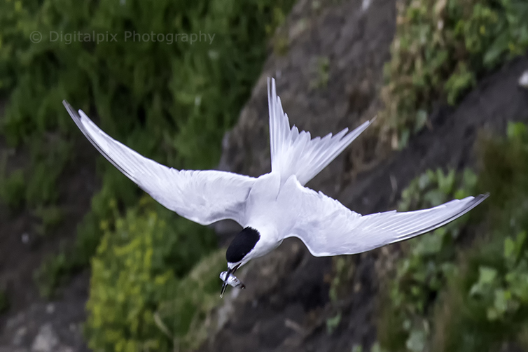 terns-blog-7