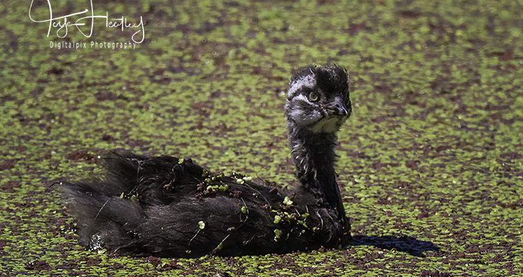 Pekapeka Wetlands / Havelock North Road Trip